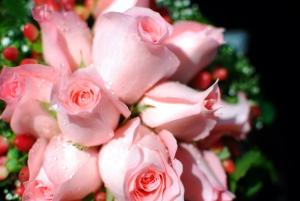róże bladoróżowe