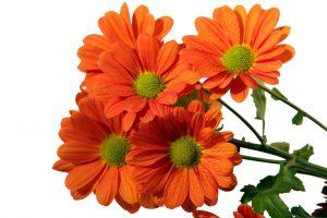 kwiaty-dziekujace